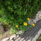 graunsberghaeuschen-5214387.jpg