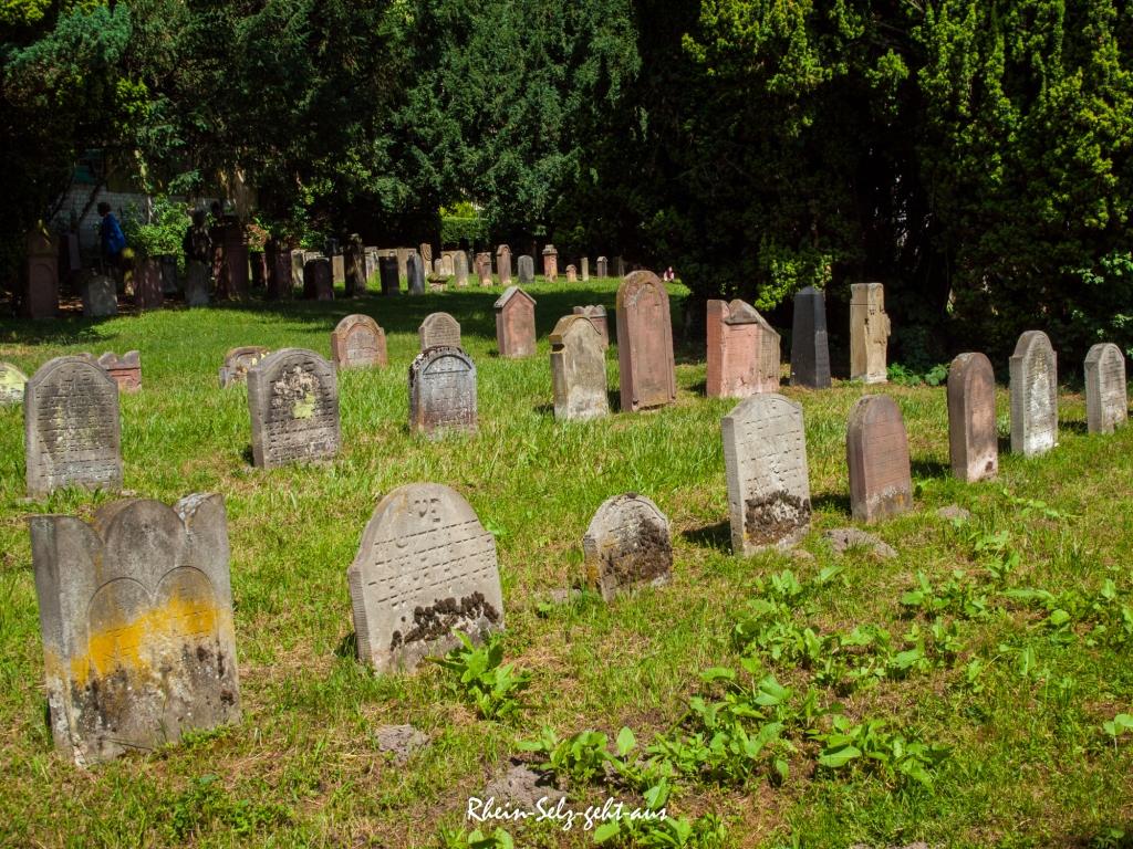Oppenheim-Juedischer-Friedhof-6175269