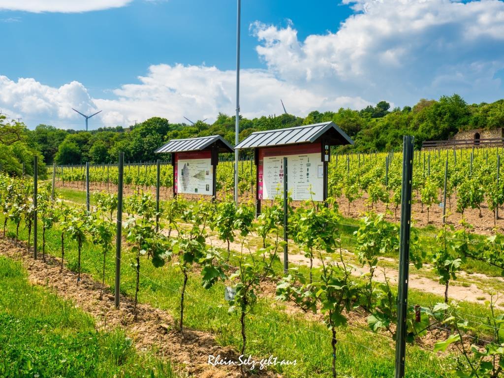 Weinlehrpfad-