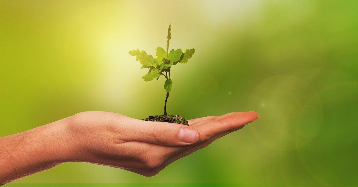 """Aktion """"Schenk' mir einen Baum"""" : erste Bäume werden gepflanzt"""